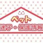 北摂 ペット迷子・保護情報【随時更新】
