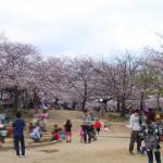 茨木市民さくら祭り・水尾公園の様子 明日もイベントやってます!