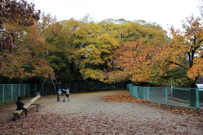 ぷらっと茨木】紅葉見ながら散歩...