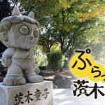 【ぷらっと茨木】紅葉見ながら散歩しよう!「元茨木川緑地」